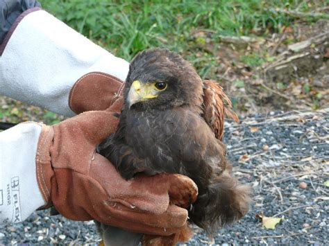 injured bird in garden garden ftempo