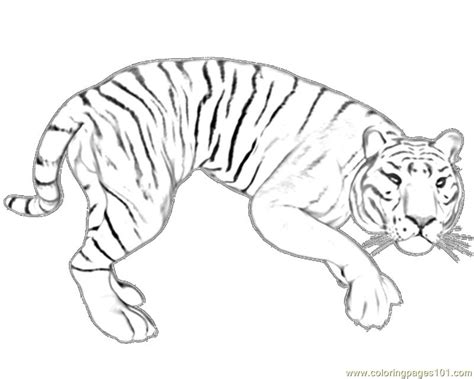 free coloring pages of a white tiger