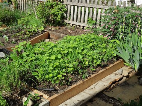raised garden bed covers life in old spokane raised bed cover crop