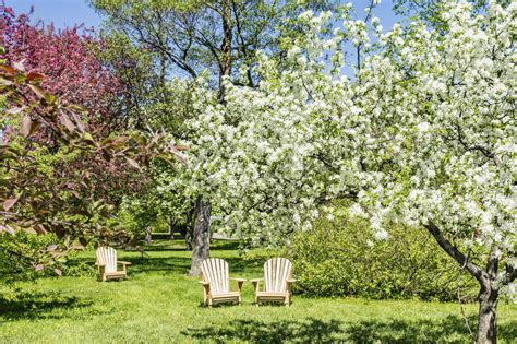 backyard apple trees 24 delicious backyard fruit tree ideas