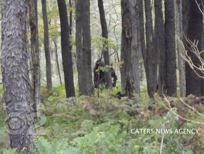 Search In Pennsylvania Bigfoot Sightings In Pennsylvania Search Engine At