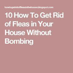 how to get rid fleas and how to get on