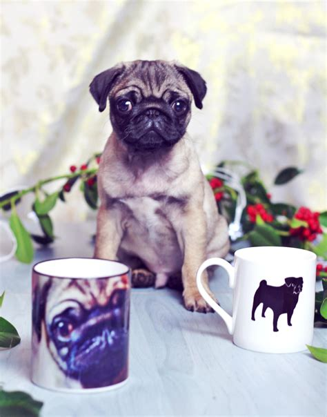gifts for pugs pug themed gift ideas for pug customisable gifts