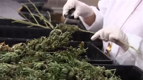 Garden Of Dispensary Garden State Dispensary Jersey Marijuana Dispensary