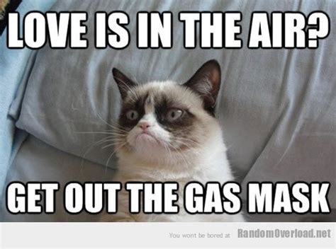 Funny Love Memes - grumpy cat my version of the hang over part ii