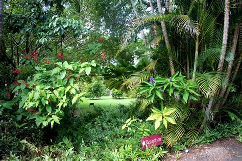 the tropical garden sunshinevalley cottages