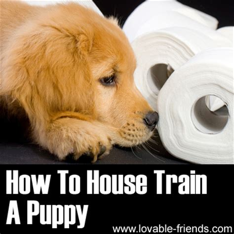 How To House Train A Puppy Video Tutorial Lovable Friends
