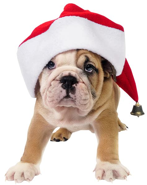 cute dog with santa hat transparent png picture