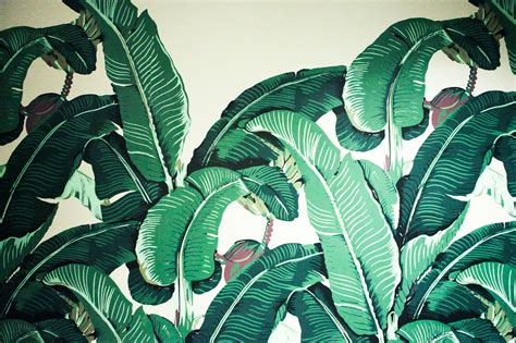 bananas leaf wallpaper palm leaf and bananas adela capova