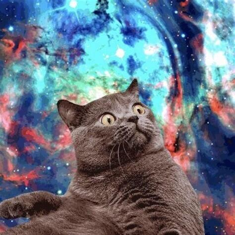 Cat In Space space cats itsspacecats
