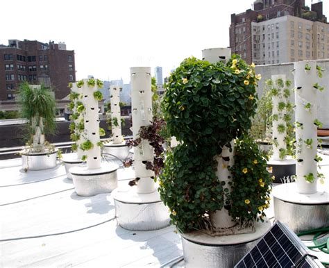 Vertical Garden Nyc Manhattan Rooftop Aeroponic Farm Yields Fresh Produce For