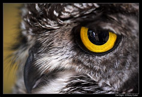 owl sight by clawzskunk on deviantart