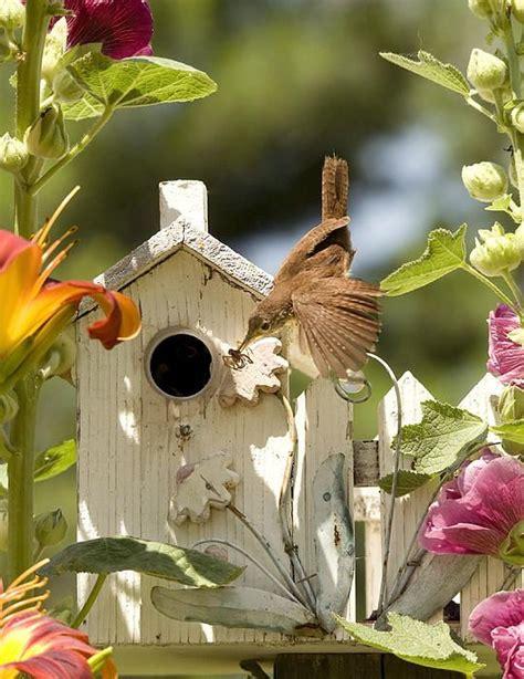 17 best images about bird sanctuary on pinterest bird