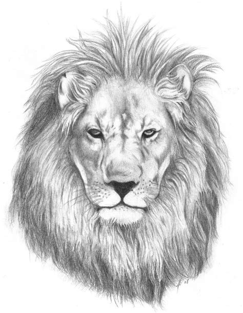 white lion tattoo black and white designs www pixshark