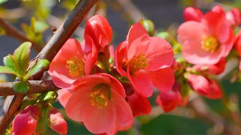 lista di fiori natur shop tutti i tipi di fiori di bach ecco la lista