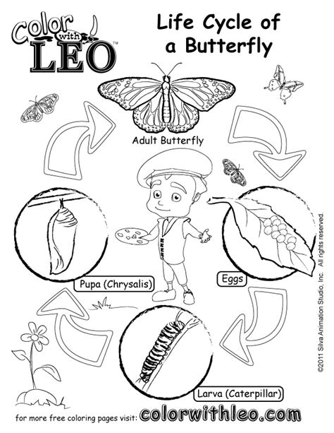 Print Free Coloring Pages For Kids Butterfly Cycle Coloring Page
