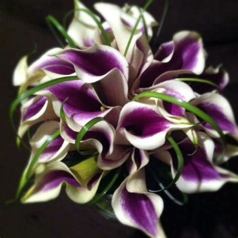 1000 images about picasso calla lily weddings on