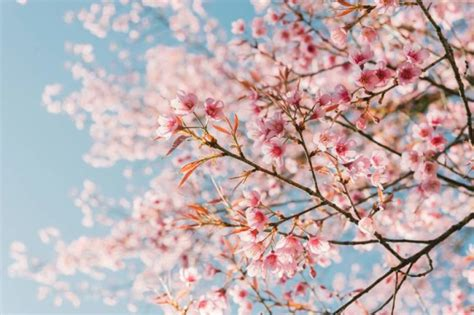 imagenes de rosas japonesas las 3 flores japonesas m 225 s emblem 225 ticas umai blog