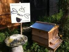 The Other Uk Version Bee Us Version what next for cambridgeshire s bee part of it hive