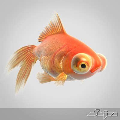 red goldfish  model