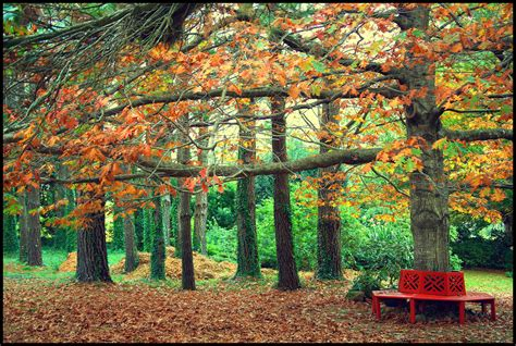 autumn park bench autumn park bench wallpaper 2048x1374 197052 wallpaperup