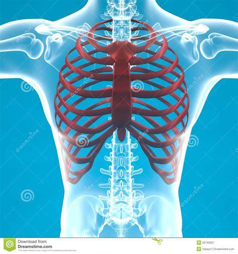 dolore gabbia toracica dolore di scheletro di gabbia toracica dell uomo