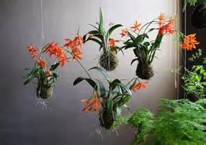 Work Lights Lowes String Gardens Elevating Hanging Plants To Art A Blog