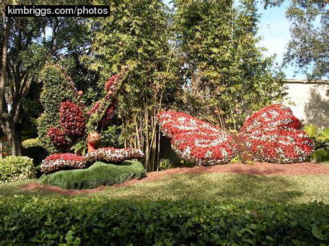 Bush Gardens Florida by Busch Gardens Fl Photos