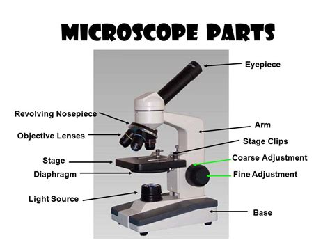 color the microscope parts light microscopy clipart microscope part pencil and in