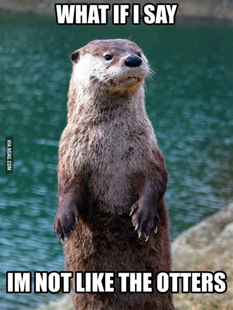 Otter Love Meme - just an otter meme geek galore pinterest