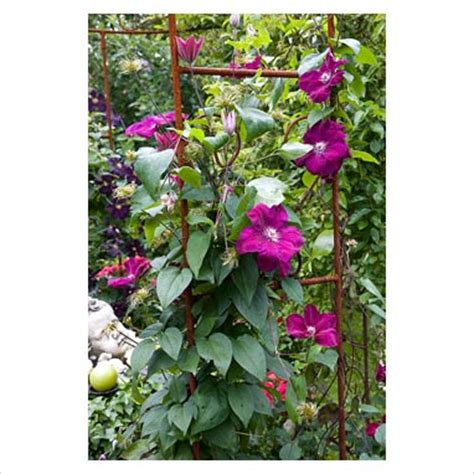 frame for climbing plants gap photos garden plant picture library climbing