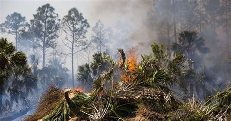 florida wildfires florida wildfire season underway crews working multiple