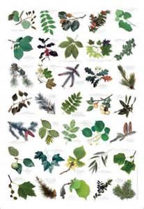 Wild Flower Meadow Seeds - alfa img showing gt tree identification chart