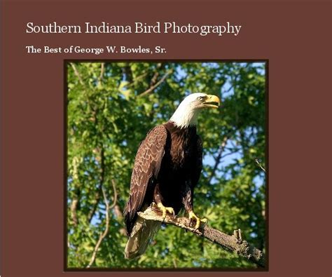 southern indiana bird photography by mary alice bowles
