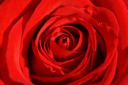la rossa la rosa nei sogni