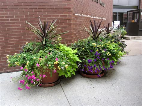 potted outdoor plants full sun bing images