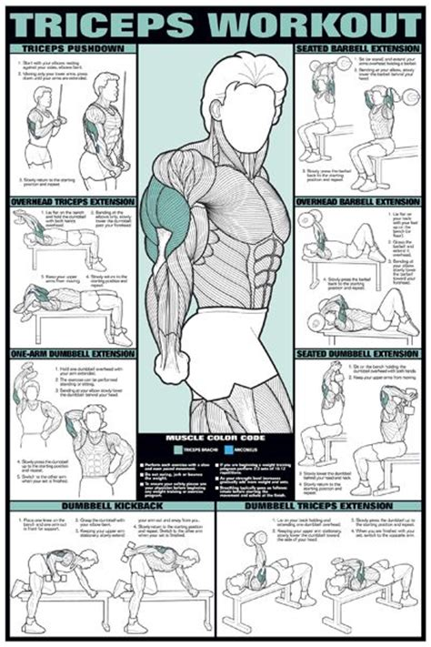 25 best ideas about bicep and tricep workout on