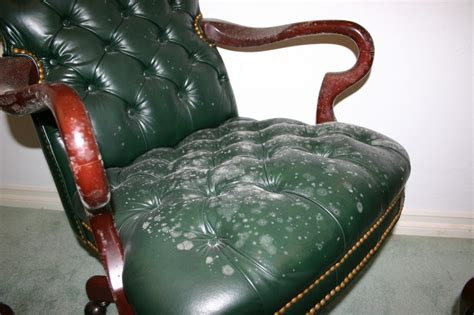 How To Remove Paint From Leather Sofa by How Does Mold Grow