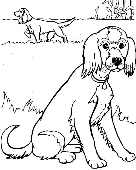 havanese dog coloring page free coloring pages of havanese