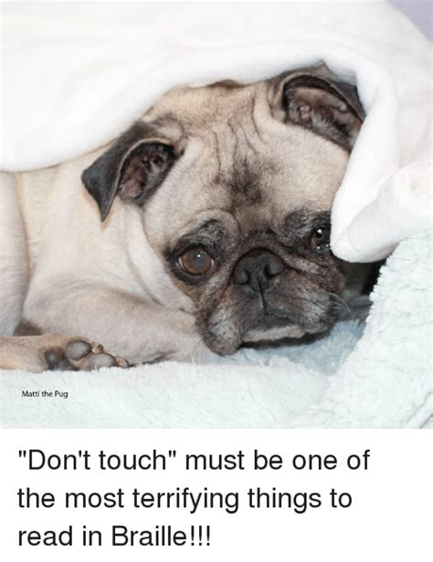 matti the pug matti the pug don t touch must be one of the most terrifying things to read in braille