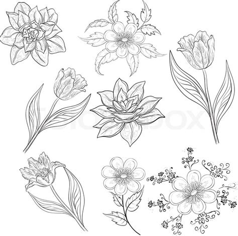 bunch  flowers outline bunch  flower outline bunch