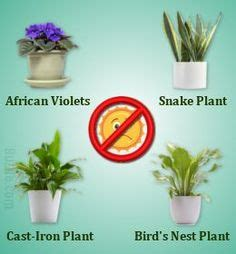 kitchen plants that don t need sunlight 1000 ideas about peace lily on pinterest spider plants