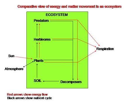 pattern of energy and matter flow project amazonia characterization energy flow