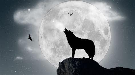 lobo full hd fondo de pantalla and fondo de escritorio lobo aullando a la luna llena 1366x768 fondos de
