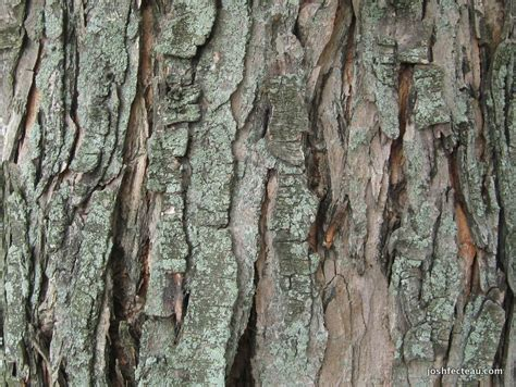 maple tree bark identification book dvd audio picks josh fecteau