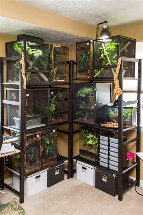 gecko shelves fired  geckos