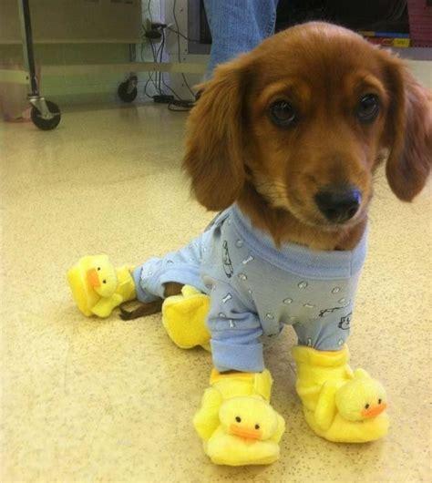 puppies in onesies 30 animals in onesies