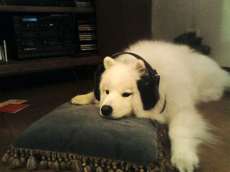 relax   dogs show    chill cuteness