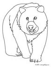 osos dibujar az dibujos colorear