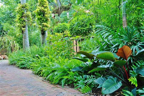 tropical backyard plants tropical backyard designs miami izvipi com